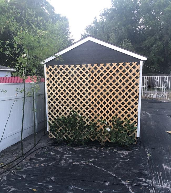 shed lattice