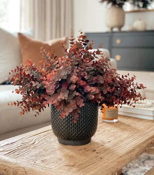 red eucalyptus